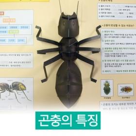 [곤충 친구들] 곤충의 특징