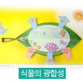 [고마운 식물 / 광합성] 식물의 광합성