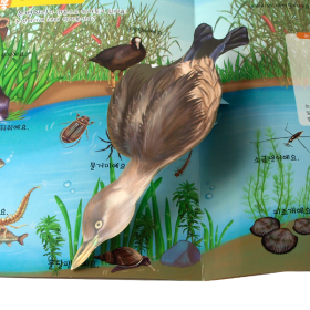 펀북 생태 [연못에 사는 생물]
